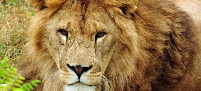 Белогорский парк львов «Тайган»