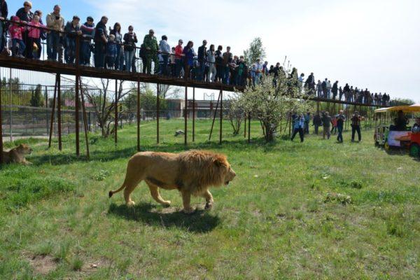 Сафари парк «Тайган»